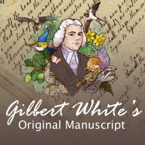 gilbert whites manuscript